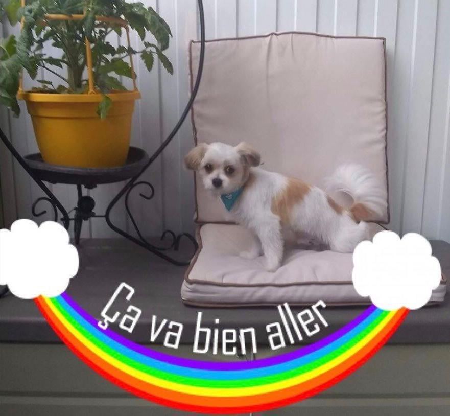 Image de chien Ça va bien aller